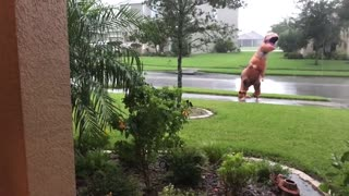 Dancing T-Rex - Video