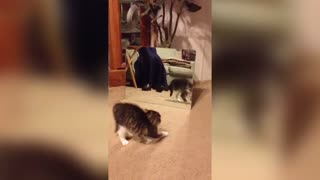 Cat Checks Out Reflection - Video