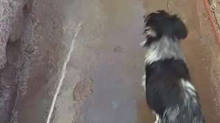Black dog getting sprayed with water  - Video
