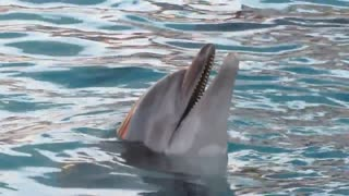 Dolphin Chan Chan sings for the public. We loved it  - Video