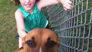 Devoted dog welcomes little girl home from school