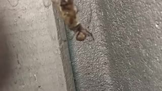 Spider vs bee
