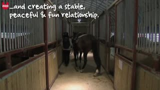 South Korean Horse Therapy - Video