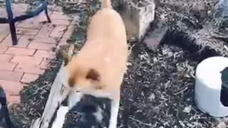 Cute dog fight