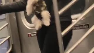 Woman straps dog onto her stomach like a baby on subway train