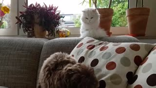 Cat throws a hilarious look after dog makes a wrong move