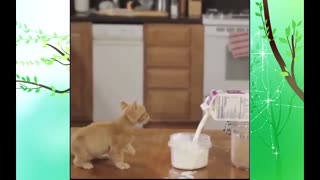mischievous cats - Video