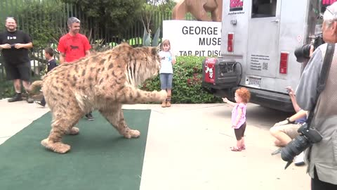 Sabertooth Tiger Strolls Down The Road in Los Angeles