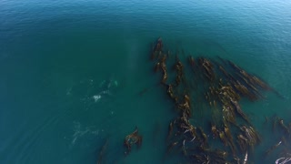 Humpback Whales in Nimmo Bay - Video