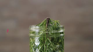 Rosemary Greyhound Cocktail, The Perfect Way to Welcome Spring - Video