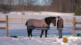 40-Year-Old Horse And His Best Friend - Video