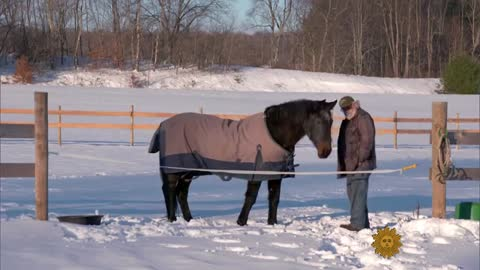 40-Year-Old Horse And His Best Friend