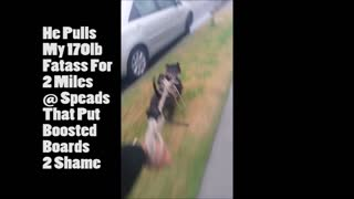 Pitbull High Speed Skateboard Run Fail - Video