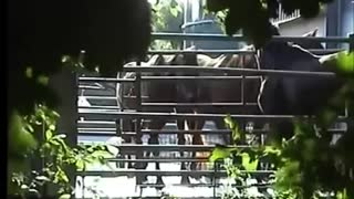 Undercover Investigation Into Horse Meat Trade - Video