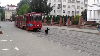 Dog vs Tram - Video