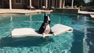 Katie the Great Dane enjoying her pool floatie - Video
