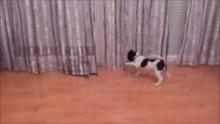 Cat and puppy - cute and funny moments  - Video