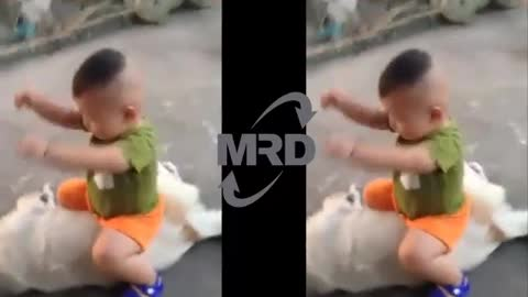 Funny Babies Riding Dogs - Baby and dog show love for one another