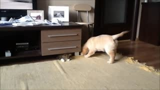 Puppy and cat play hide-and-seek