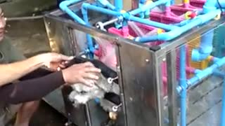 Automatic Dog Washing Machine - Video