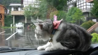 Cat has epic battle with persistent windshield wiper