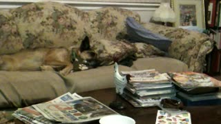 Sneaky cat attacks sleeping dog - Video