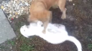 dog and cat love story  - Video