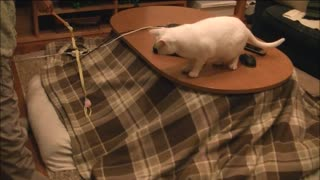Cat has endless energy running in circles