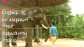 Talking Elephant? - Video
