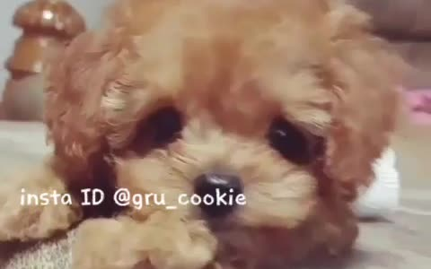 Cute puppy adorably poses for the camera