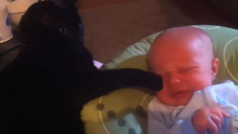 Baby and Cat Funny