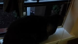 Indoor Kitty Reacts To Outdoor Kitty - Video