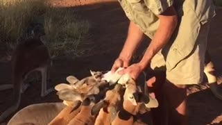 Milk Time at the Sanctuary - Video