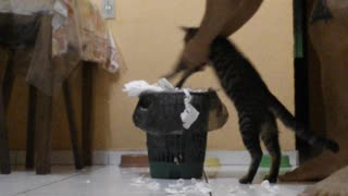 Cat Cleans His Mess - Video
