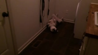 Puppy caught sleeping in hilariously odd fashion - Video