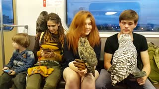 Pet Owls on Train - Video