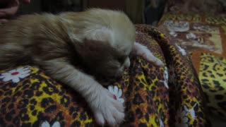 Little kitten loves a massage. - Video