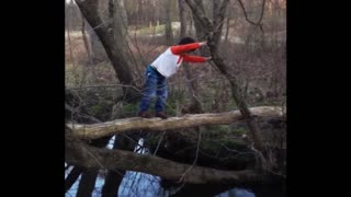 Why Trees Aren't Wide Enough To Use As A Bridge - Video