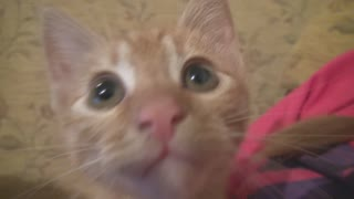 Cute kitten listening attentively - Video