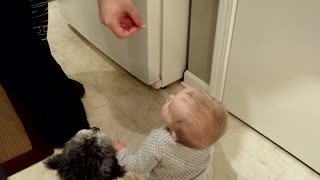 Baby and puppy receive snacks - Video