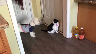 Cat is trying to defend  - Video
