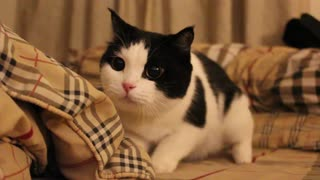 Ever see a cat move like this? - Video
