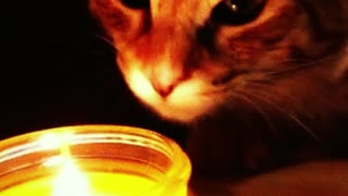 cat looks at the candle. he really likes it