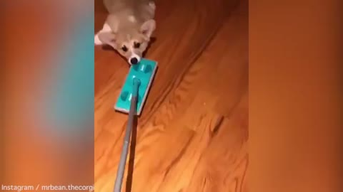 When His Parents Clean Their Home, This Cutie Knows Just How To Help