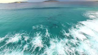 Dolphins Having Fun In The Waves At An Australian Beach - Video