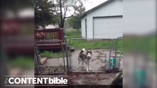 "Dog Says ""Hello"" - Video"