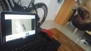 Dog Barks & Tries To Grab Lizard On Tablet Screen - Video