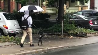 Funny dog goes for walk on hind legs