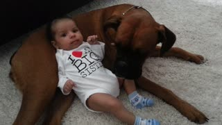 Cute baby uses boxer dog as pillow - Video