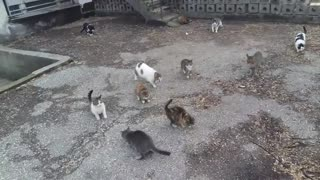 A cat colony and their two puppy friends
